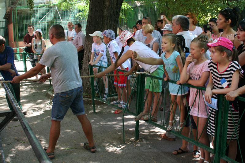 Перетягивание каната с львицей Одесского зоопарка