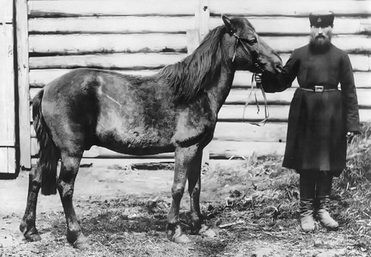 На фото - Шатиловский тарпан фото Шатилова И.Н. 1884 год. Ист. www.bizslovo.org