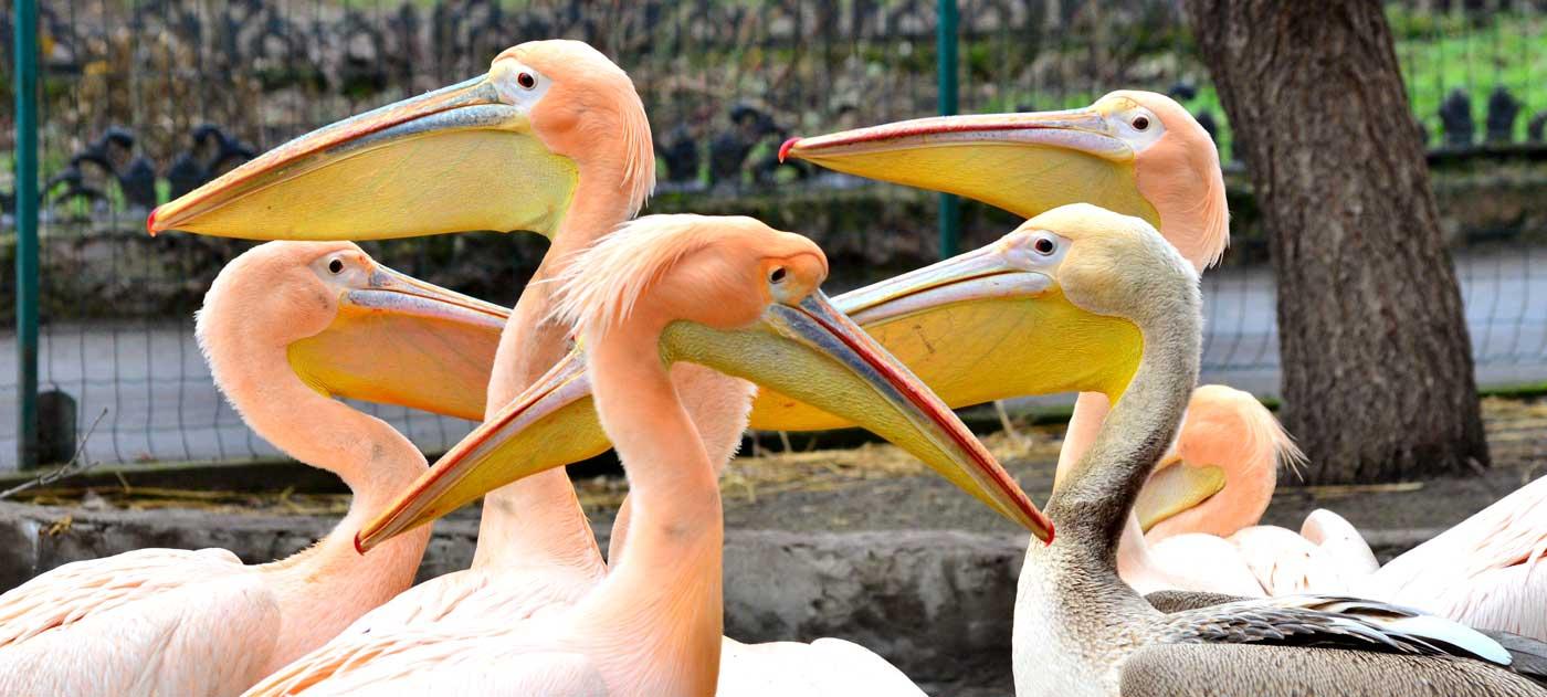 Одесский зоопарк - парк, где вас всегда ждут!